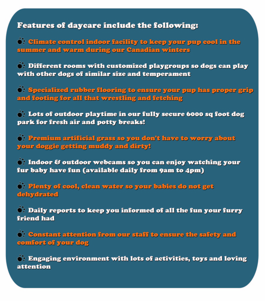 Features of Daycare